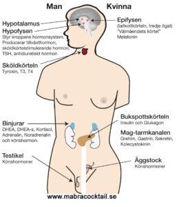Hormonorgan